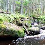 Kauhanevan – Pohjankankaan kansallispuisto